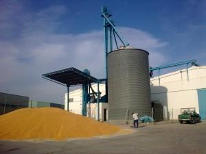 secado maiz 2